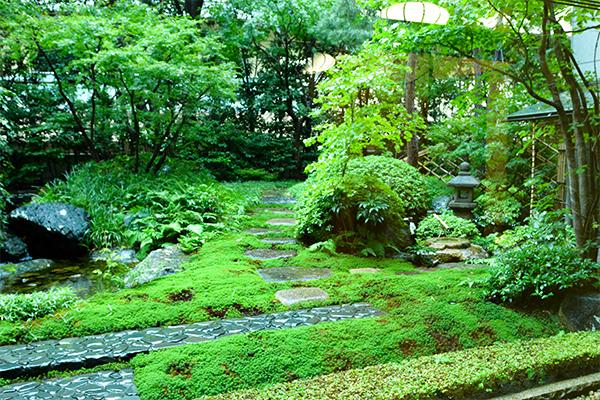 東京美術倶楽部 茶室「済美庵」からの眺め