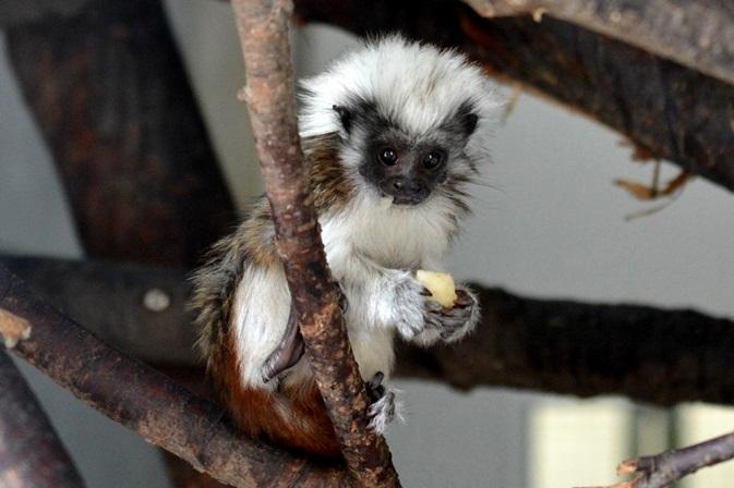 生後2か月ぐらいの赤ちゃん(日立市かみね動物園にて2015年9月に撮影)