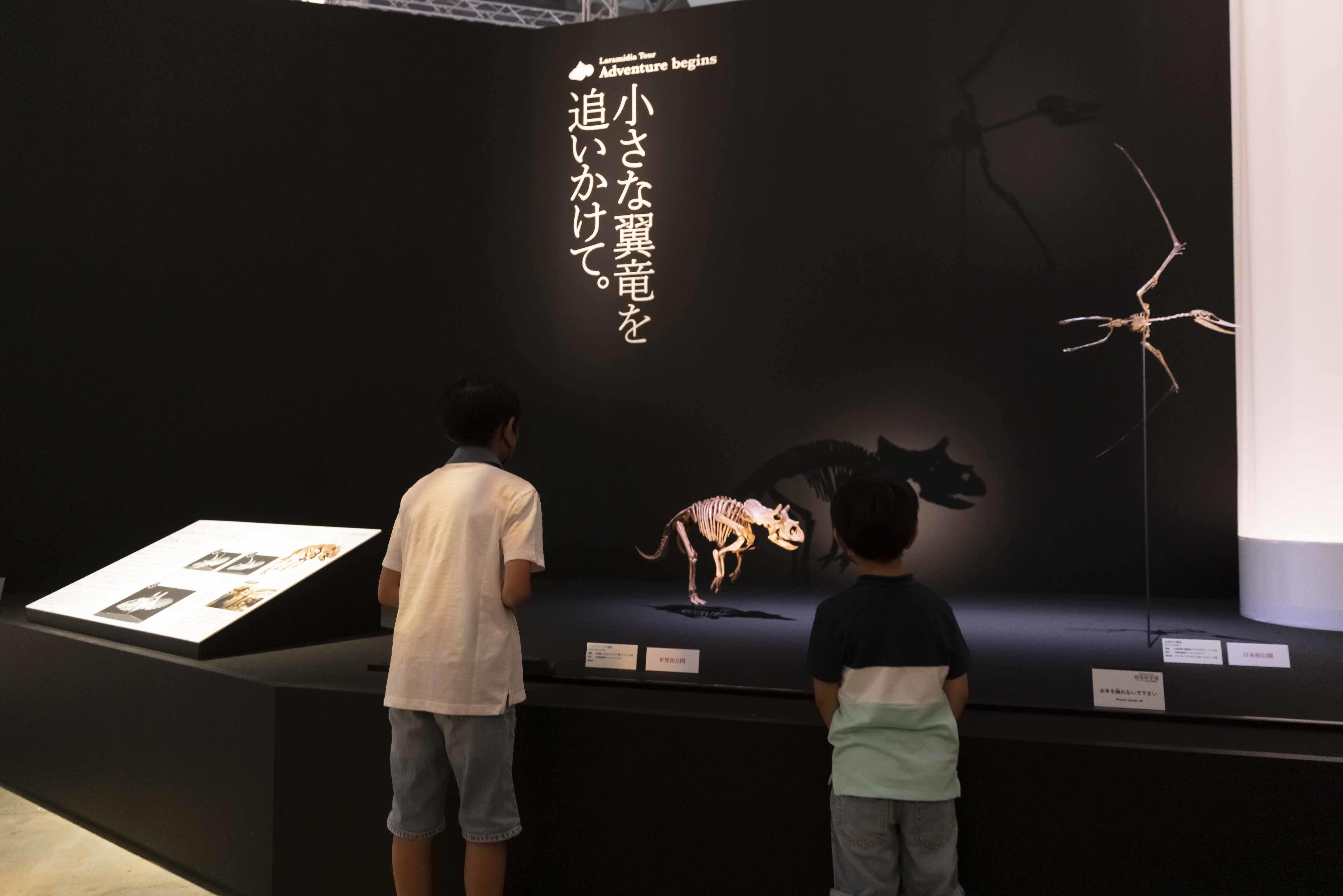 子供トリケラトプスの骨格標本は、本展のため「レイン」の骨格を元に科学的に再現し、世界で初めて組み立てられたものだ