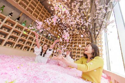 「体験型インドア花見」を楽しめるチルアウトバー「SAKURA CHILL BAR by 佐賀」が、表参道に期間限定オープン