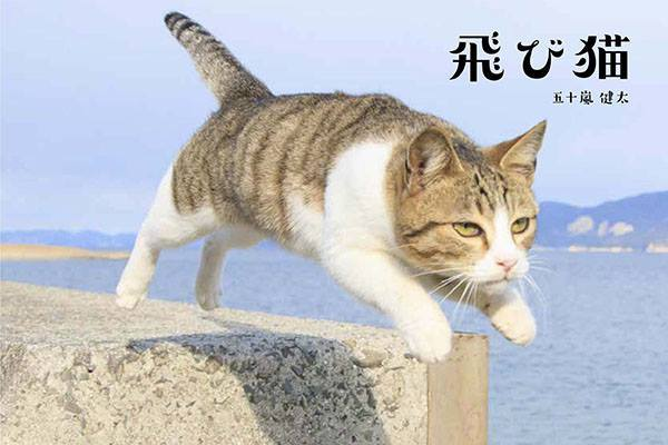 五十嵐健太ネコ写真展