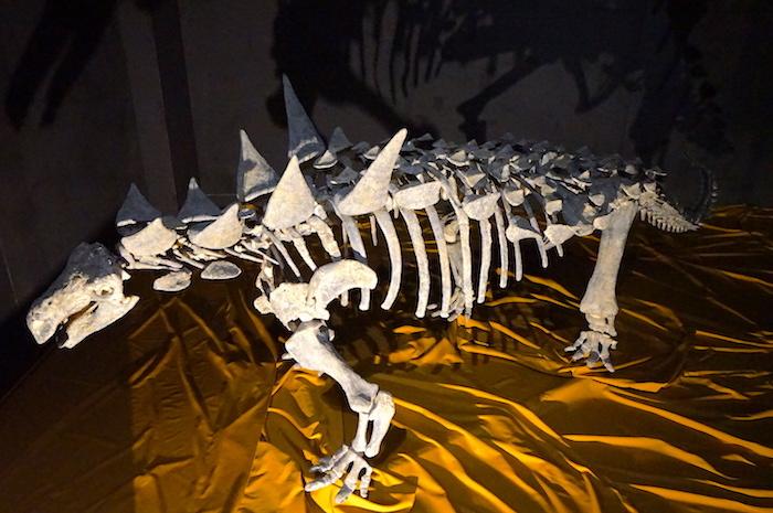 アニマンタルクス復元骨格  福井県立恐竜博物館所蔵