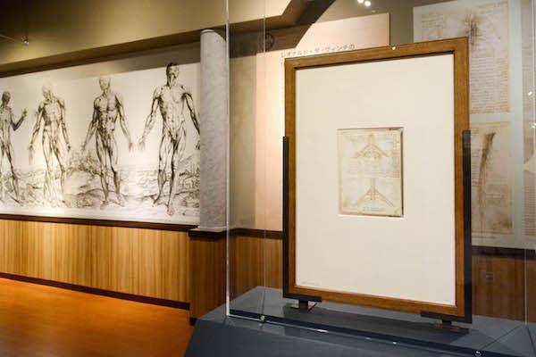 レオナルド・ダ・ヴィンチの『解剖手稿』より《腕神経叢》(画面右)