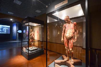 特別展『人体―神秘への挑戦―』レポート タモリも驚愕した、人体研究の歴史と最新知見 超リアルな人体模型や実物標本も