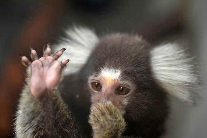 後足の親指以外は「かぎ爪」(日立市かみね動物園にて撮影)