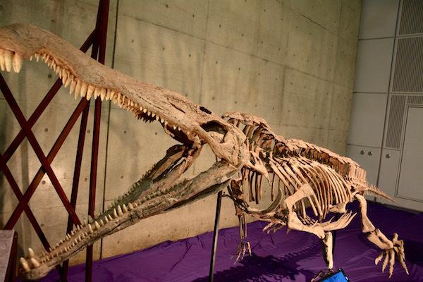 ワニのような大きな口を持つ、恐竜時代の大型爬虫類「レドンダサウルス」