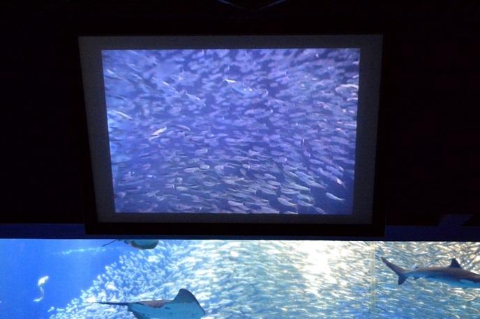 ダイバーが撮影する映像を映すスクリーン