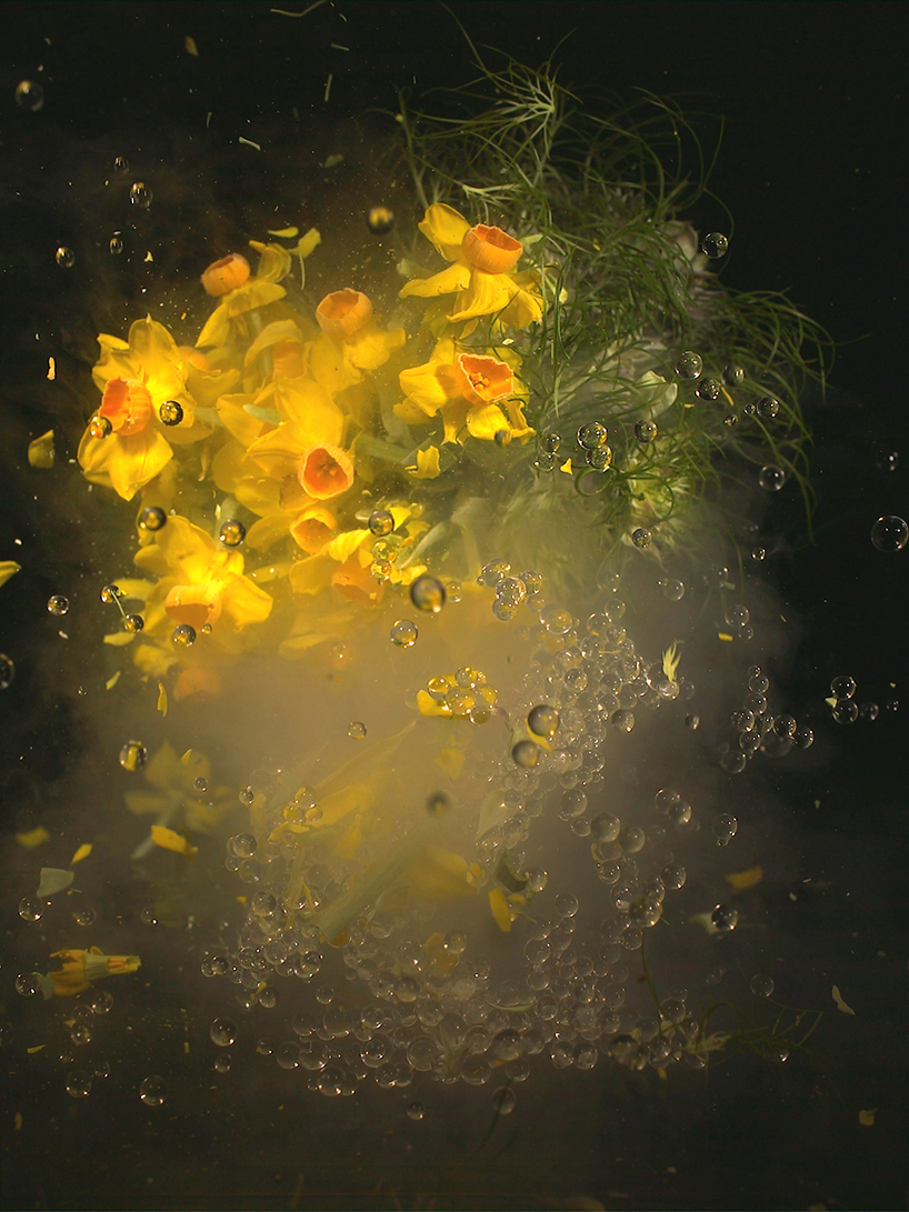 「Moon Flower」