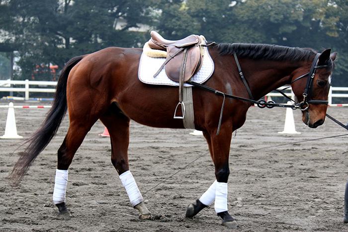 タマモラッシュ号。東京乗馬倶楽部では初心者教室もあるそうですよ!