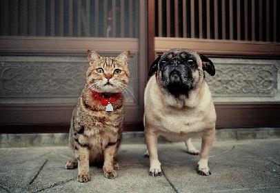 猫と犬の写真約300点を展示!岩合光昭写真展「ねこいぬ」徳島市にて開催