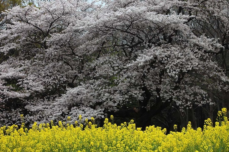 撮影:竹内敏信(東京都代々木公園)