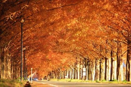 米原発・琵琶湖一周サイクリングで秋の絶景に出会う!