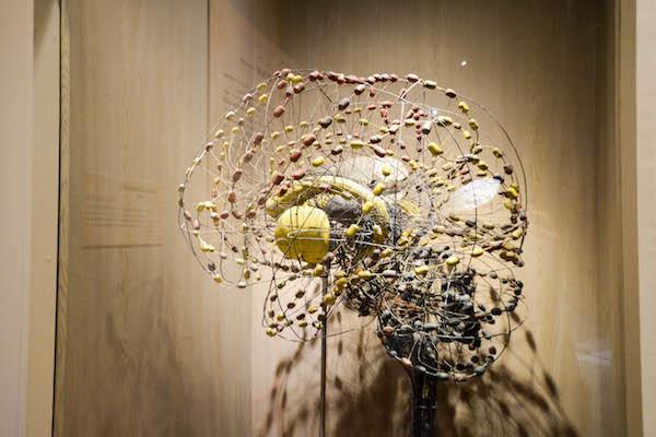 「脳の神経線維模型」 スイス・ブシ社製 1893-1910年 ブールハーフェ博物館所蔵 (c)Rijksmuseum Boerhaave,Leiden V25313