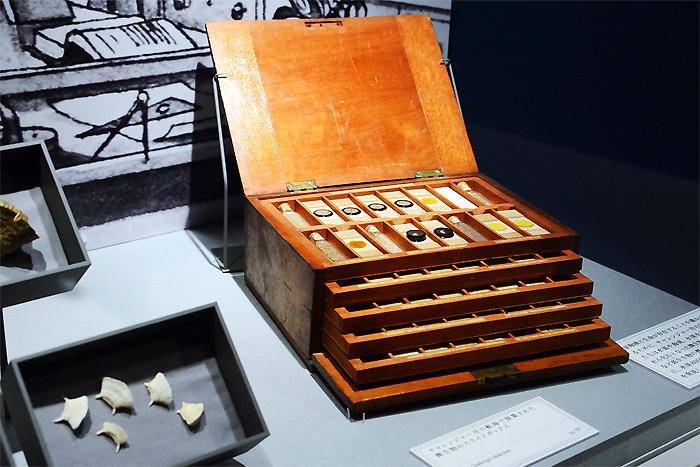 チャレンジャー号の航海で採集された微生物のスライドボックス