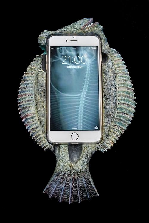 カレイPhone 6 Plus