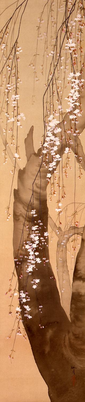 西郷孤月《月・桜・柳》の「桜」 1901(明治 34)年頃 絹本・彩色 山種美術館  ※特別展『桜 さくら SAKURA 2020 ―美術館でお花見!― 』(会期:7月18日(土)再開~9月13日(日))