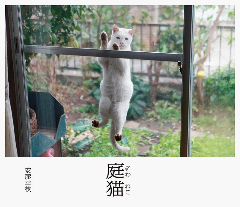 写真集『庭猫』