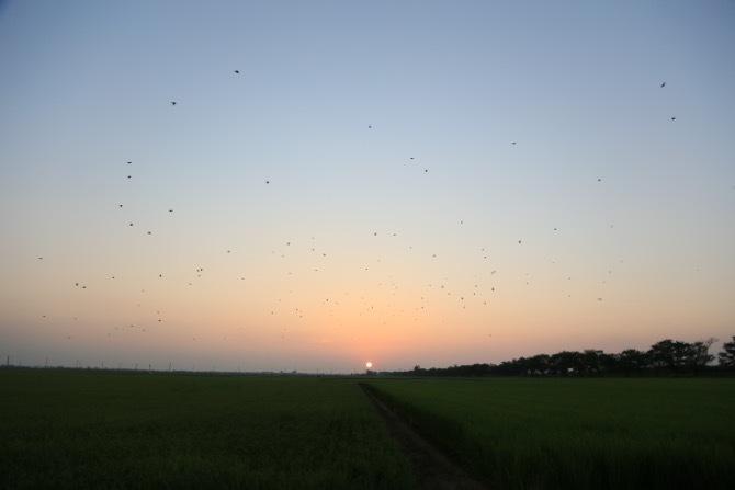 地平線への日没とともに野鳥が潟の巣へ帰っていく