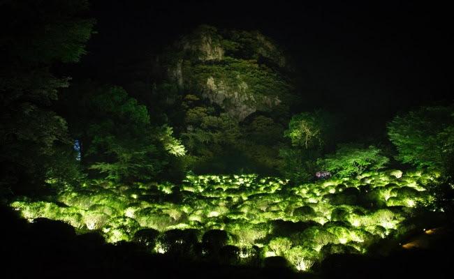 生命は連続する光 - ツツジ谷 / Life is Continuous Light - Azalea Valley