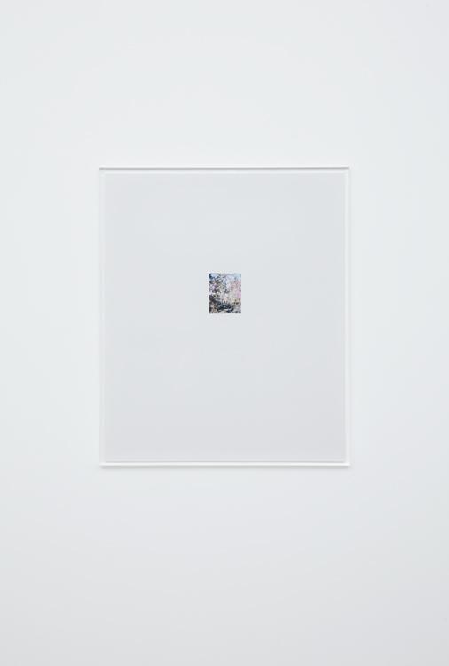 林檎の木 6 2017  c-print, frame: acrylic 63.1 × 52.8 cm ©Yoshihiko Ueda, Courtesy of Tomio Koyama Gallery