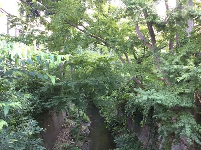 桜桃忌当日(6月19日)の玉川上水未開発地帯