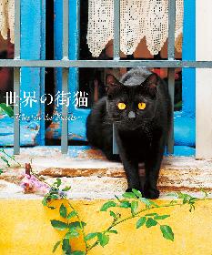 世界中の猫が集結――パリの街角に佇む猫やトルコの市場でのんびり暮らす猫たちを紹介した書籍『世界の街猫』が発売