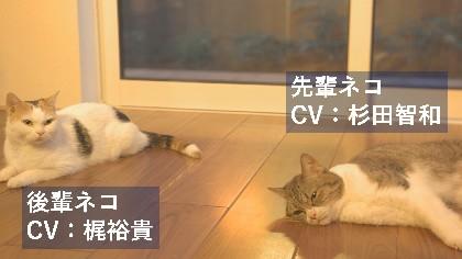 杉田智和と梶裕貴が猫にアテレコで共演「地震あんしん保証」のWEBCM3篇をYouTubeで同時公開